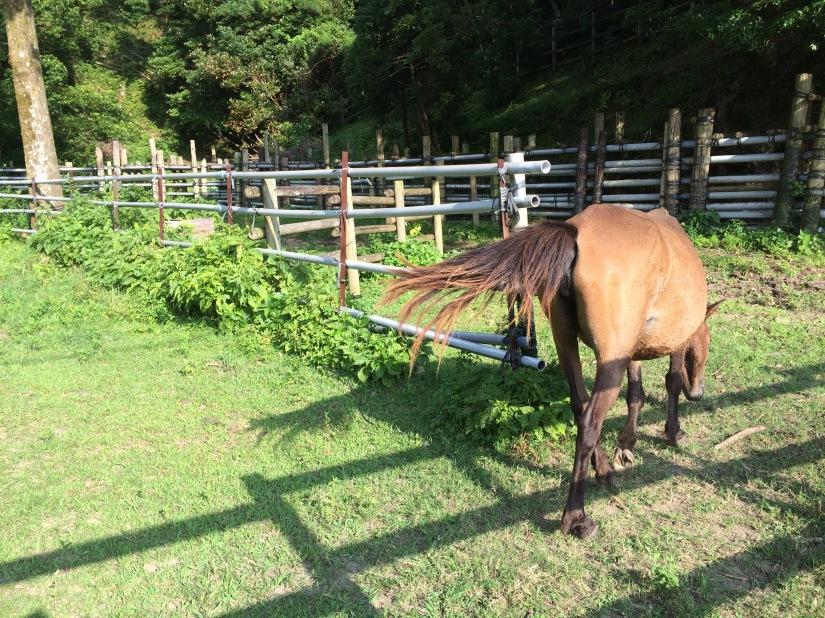 Horseswalkingaway