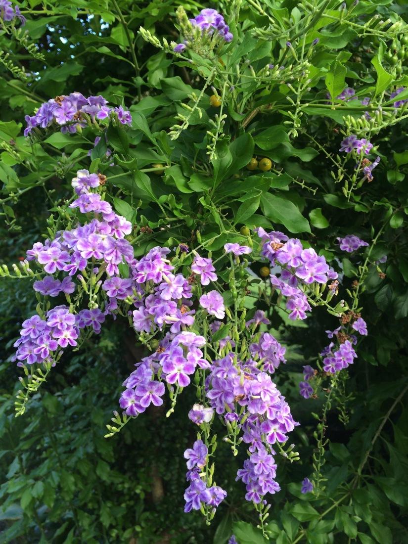 Morepurpleflowers